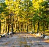 Nasser Schotterweg, der einen Wald durchläuft Stockbild