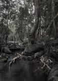 Nasser Sommerwald des Dschungels, Schwarzweiss-Foto, Thailand Lizenzfreie Stockfotos