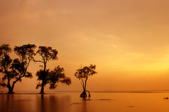 Nasser Sonnenuntergang Stockbilder