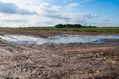 Nasses Ackerland in den Niederlanden Stockfotos