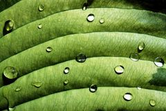 Nasses grünes Blatt Stockfoto