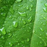 Nasses grünes Blatt Stockfotos
