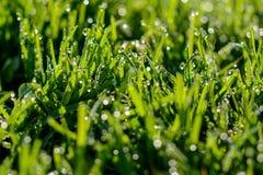 Nasses Gras Stockfotografie
