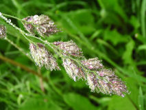 Nasses Gras Stockbild