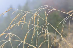 Nasses Gras im Nebel Stockfotografie