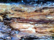 Nasses Holz stockbild
