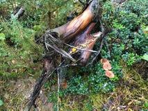 Nasses Holz Stockfoto