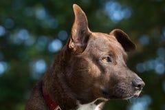 Nasses Hundeporträt stockbild