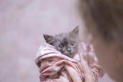 Nasses Kätzchen Lizenzfreies Stockfoto