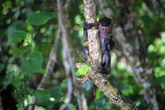 Nasses Makakenporträt auf einem Baum Lizenzfreie Stockfotografie