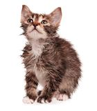 Nasses Kätzchen Lizenzfreie Stockfotos