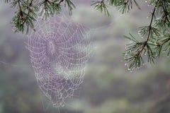 Nasses Spinnen-Netz im Regen lizenzfreie stockbilder