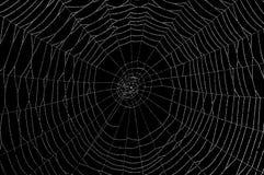 Nasses Spinnennetz auf Schwarzem Stockfotografie