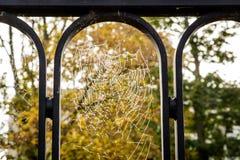 Nasses Spinnennetz III Lizenzfreie Stockfotos