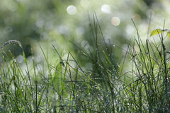 Nasses wildes Gras Stockbilder