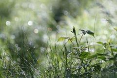 Nasses wildes Gras Lizenzfreie Stockbilder