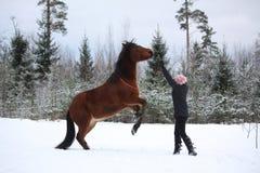 Nastolatek dziewczyny dominujący podpalany koń tyły Obrazy Royalty Free