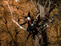 Nastoletnia dziewczyna ubierał w czarownicy kostiumowym obsiadaniu na drzewie Zdjęcie Stock