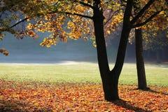 nastrój jesieni Zdjęcie Stock