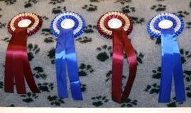 Nastri del vincitore dell'esposizione canina in una fila Fotografia Stock