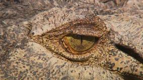 Nastro dell'occhio del coccodrillo stock footage
