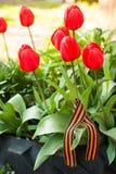 Nastro di St George sul letto di fiore dei tulipani rossi Fotografia Stock Libera da Diritti