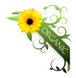 Nastro per il prodotto organico Fotografie Stock Libere da Diritti