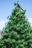 Nastro su un albero di Natale Immagine Stock Libera da Diritti