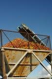 Nastro trasportatore delle mele Fotografia Stock Libera da Diritti