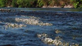 Nastroje spey zatoka, rzeki zatoka w Czerwu wcześnie w ranku, Szkocja zbiory wideo