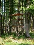 Nastroszona kryjówka - nastroszona stora w jesieni świetle Obraz Royalty Free