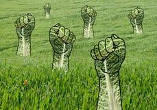 Nastroszone Zielone pięści w trawy polu Fotografia Stock