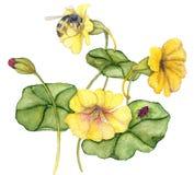Nasturiums en bijen vector illustratie