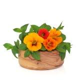 Nasturtian Blumen und tadelloses Kraut stockfoto