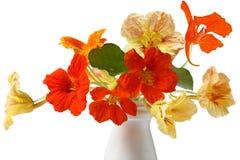 Nasturtium Bouquet Royalty Free Stock Image