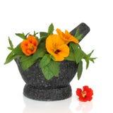 Nasturtium Flower and Mint Herb Stock Photo