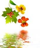 Nasturtium flowers, foliage maple and rowan berries Royalty Free Stock Photo