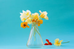 Nasturtium flowers in a glass vase. Beautiful bouquet. Romantic Stock Image