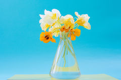Nasturtium flowers in a glass vase. Beautiful bouquet. Romantic Royalty Free Stock Images