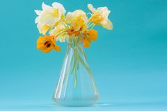 Nasturtium flowers in a glass vase. Beautiful bouquet. Romantic Royalty Free Stock Image