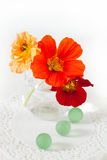 Nasturtium flowers in a small vase Royalty Free Stock Photos