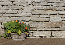 Nasturtium flowers in a stone flower pot on a timber brown floor Stock Image