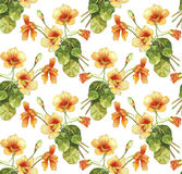 Nasturtium flowers watercolor seamless pattern Royalty Free Stock Photography