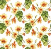 Nasturtium flowers watercolor seamless pattern Royalty Free Stock Photography