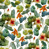 Nasturtium pattern Royalty Free Stock Photos