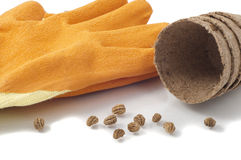 Free Nasturtium Seeds, Peat Pots And Gardening Gloves Stock Image - 48058901