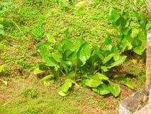 Naszłe rośliny nowa Hartz fotografia stock