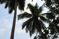 Nasz podróż India stan Goa Obrazy Stock
