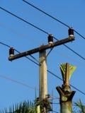 Naszywanej palmy lub kokosowego drzewa próba ximpx pod wysokiego woltażu elektrycznymi liniami Obraz Royalty Free