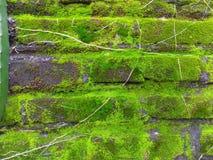 Natürlicher Hintergrund Grünes Moos auf Backsteinmauer stockbilder